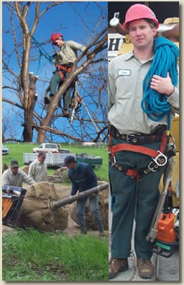 collage showing technician in a tree, with equipment, and multiple moving a tree